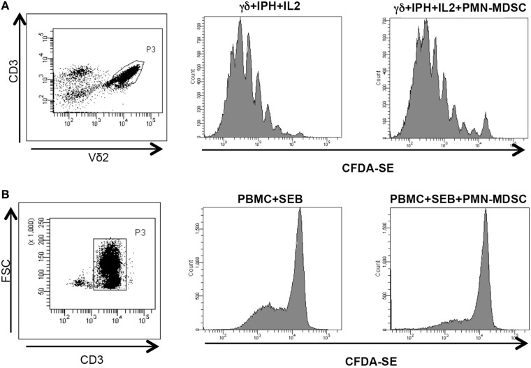 PMN-myeloid-derived suppressor cells (MDSC) does not inhibit Vδ2 T cell proliferation. γδ T cells or peripheral blood mononuclear cell (PBMC) labeled with CFDA-SE were stimulated with IPH in the presence of PMN-MDSC (1:1 ratio). After 5 days, Vδ2+ and CD3+ T cells proliferation was evaluated by flow cytometry. Representative gating strategy and histogram plots of one out of three independent experiments showing Vδ2 T cells (A) and CD3+ T cells (B) proliferation in the indicated conditions.