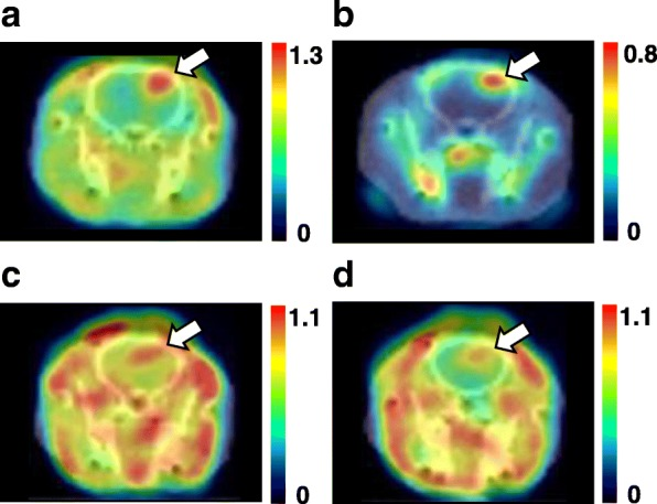 PET imaging using L- and D- 18 F-FBPA ( a , b ) and L- and D- 11 C-CMT ( c , d ) in C6 glioma-bearing rat brains. Rats anesthetized by isoflurane were positioned prone on a fixation plate. After a transmission scan for 15 min, 10 MBq of each PET probe was intravenously injected, and an emission scan was performed for 90 min with 18 F-FBPA or for 60 min with 11 C-CMT. Summation images from 60 to 90 min for 18 F-FBPA and from 30 to 60 min for 11 C-CMT were reconstructed, and SUV images were created