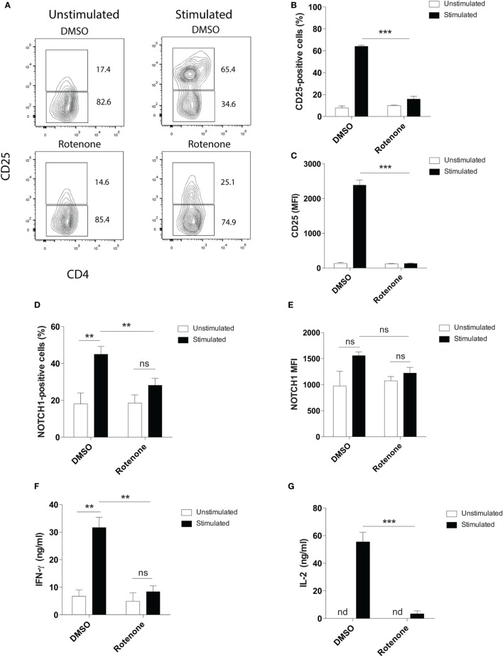Rotenone treatment reduces T cell activation upon anti-CD3ε plus anti-CD28 stimulation. Mouse splenic CD4 T cells were left untreated or treated with 20 µM rotenone for 2 h, then stimulated with plate-bound anti-CD3ε plus anti-CD28 for 24 h. CD25 and Notch1 levels were measured as read-outs of T cell activation via flow cytometry. (A) Representative contour plot showing CD25-expressing cells left unstimulated or stimulated in the presence or absence of rotenone for 24 h. The (B) percent CD25-positive, and (C) median fluorescence intensity (MFI) of CD25, as well as the (D) percent Notch1-positive (E) MFI of Notch1 on CD4 T cells, cultured as described above. At the end of 24 h of stimulation, culture supernatants were collected, and standard enzyme-linked immunosorbent assay techniques were used to quantify secreted (F) IFNγ and (G) IL-2. Data represent the mean ± SEM of three independent experiments. * p