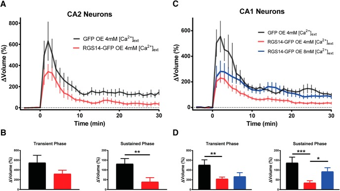 RGS14 expression blocks long-term spine plasticity in <t>CA2</t> and <t>CA1</t> neurons lacking RGS14, and high extracellular Ca 2+ restores structural plasticity to RGS14-expressing neurons. A , Averaged time course of spine volume change in the presence or absence of RGS14 during the induction of spine structural plasticity by repetitive two-photon glutamate uncaging in the absence of extracellular Mg 2+ in CA2 pyramidal neurons from RGS14 KO mice. The number of samples (spines/neurons/animals) for stimulated spines are 11/4/3 for GFP (black) and 11/4/3 for RGS14-GFP (red). B , Quantification of the average volume change for stimulated spines either in the presence or absence of RGS14 during the transient (1–3-min) and sustained (21–25-min) phases of sLTP induction for CA2 neurons. Unpaired t test, **, p = 0.01. C , Averaged time course of spine volume change during the induction of spine structural plasticity in the presence or absence of RGS14 by repetitive two-photon glutamate uncaging in the absence of extracellular Mg 2+ in CA1 pyramidal neurons from RGS14 KO mice. The number of samples (spines/neurons/animals) for stimulated spines are 11/4/4 for GFP (black) and 23/9/6 for RGS14-GFP 4mM external [Ca 2+ ] (red), and 9/4/4 for RGS14-GFP external 8mM [Ca 2+ ] (blue). D , Quantification of the average volume change for stimulated spines in the presence or absence of RGS14 during the transient and sustained phases of sLTP induction for CA1 neurons. Fisher's LSD test, *, p