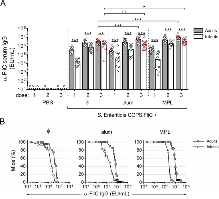 Anti-FliC IgG responses in adult and infant mice after immunization with S . Enteritidis COPS:FliC alone or formulated with different adjuvants. Infant and adult mice ( n = 16–20/group) were immunized with PBS or S . Enteritidis COPS:FliC formulated alone (ɸ), adsorbed to alum, or admixed with MPL. (A) Serum anti-FliC IgG titers taken 12–14 days after each dose were determined by ELISA. Each point represents an individual mouse. Red squares indicate mice that succumbed to subsequent challenge. Bars represent the GMT for adults (grey) and infants (white), and were compared using a two-tailed Mann-Whitney U test. Adjustments for multiple comparisons were not made. ns, not significant. * P ≤ 0.05; ** P ≤ 0.005; *** P ≤ 0.0005 for indicated comparisons. (B) Reverse cumulative distribution curves for post 3 rd immunization anti-FliC IgG titers for adults (grey circles) and infants (white circles) are depicted.