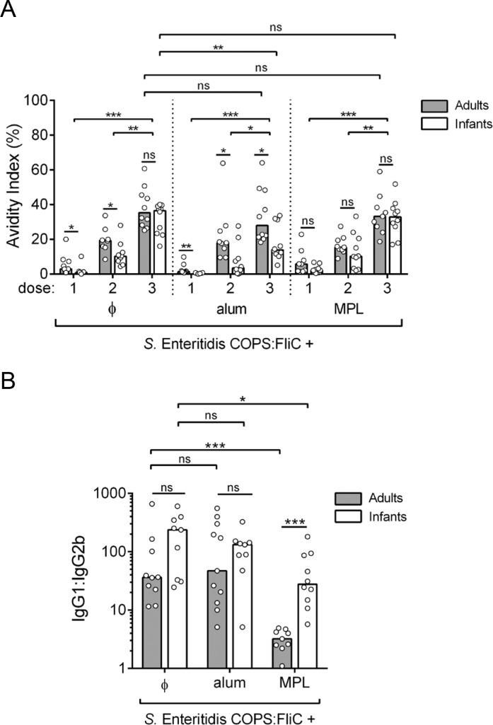 Isotype and avidity of anti-FliC IgG in adult and infant mice after immunization with S . Enteritidis COPS:FliC alone or formulated with different adjuvants. (A) The avidity of anti-FliC IgG in sera taken after each immunization ( n = 8–10) was determined by sensitivity to urea treatment in an ELISA format. (B) Post 3 rd immunization FliC-specific serum IgG1 and IgG2b titers were determined by ELISA ( n = 9–10). The ratio of the two titers is plotted. Each point represents an individual mouse. Bars represent the median for adults (grey) and infants (white) that was compared using a two-tailed Mann-Whitney U test. Adjustments for multiple comparisons were not made. P-values ≤ 0.05 were considered to be statistically significant; ns, not significant. * P ≤ 0.05; ** P ≤ 0.005; *** P ≤ 0.0005 for indicated comparisons.
