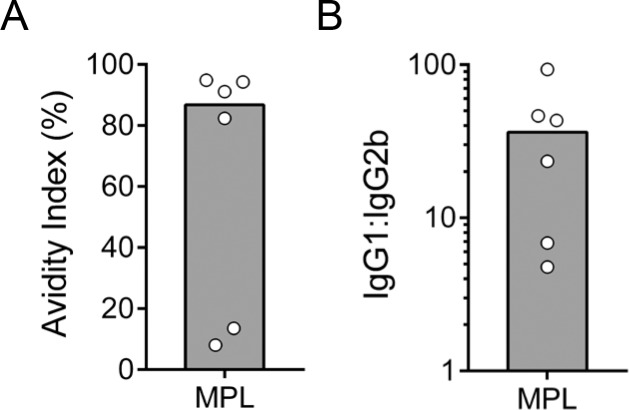 Isotype and avidity of anti-COPS IgG in adult mice after immunization with S . Enteritidis COPS:FliC formulated with MPL. (A) The avidity of anti-COPS IgG after the 3 rd immunization ( n = 6) was determined by ELISA. (B) Post 3 rd immunization serum COPS-specific IgG1 and IgG2b titers were determined by ELISA. The ratio of the two titers is plotted. Each point represents an individual mouse. The bar represents the median.