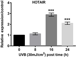 qRT-PCR was performed to evaluate the effect of UVB on HOTAIR and data revealed that UVB upregulated the expression of HOTAIR. Data are reported as means±SD. ***P