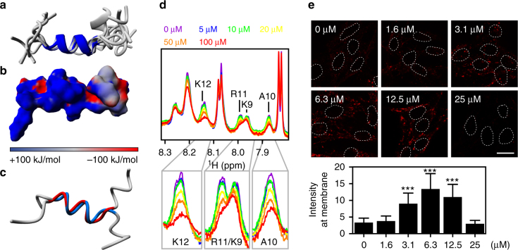 Molecular tweezers inhibit the translocation of SpHtp3. a Superimposition of the 10 lowest-energy NMR-based structures of the C-terminal peptide of SpHtp3 with the central helix (P204-K211) highlighted. b Electrostatic surface presentation of the C-terminal peptide of SpHtp3. Positive, neutral and negative charges are displayed in blue, grey and red, respectively. c Superimposition of the NMR-based structures of the C-terminal peptide wt (blue) and the double mutant (K208A/R210A, red) of SpHtp3 with the central helix (P204-K211). d 1 H-1D NMR titration experiments of the SpHtp3 peptide with a stepwise increasing amount of tweezers as indicated. Decreasing signal intensities indicate an interaction of both. e Effect of molecular tweezers on the translocation of SpHtp3-mRFP into RTG-2 cells. With increasing tweezers' concentrations, the uptake and cell surface binding of SpHtp3 are interrupted. Nuclei are indicated by dashed lines. Error bars denote s.e.m. (cells: 50). *** p