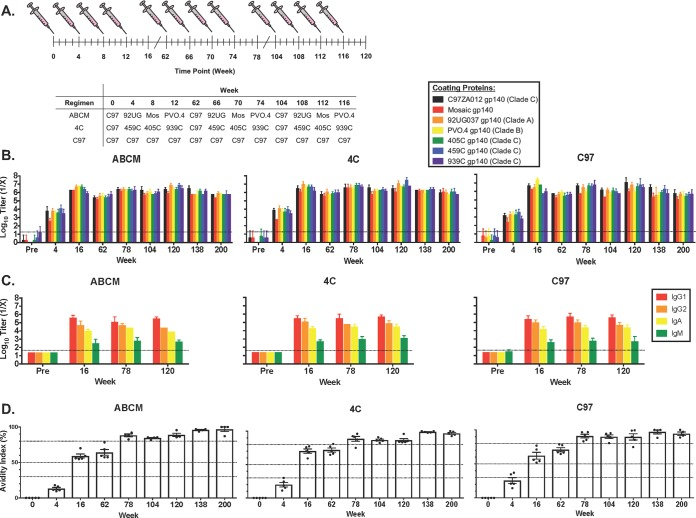 Vaccination regimens and characterization of binding antibody responses. (A) Vaccination regimens for guinea pigs immunized with a longitudinal prime/boost vaccination schedule. Animals were vaccinated at weeks 0, 4, 8, 12, 62, 66, 70, 74, 104, 108, 112, and 116 utilizing the listed vaccination regimens and bled 4 weeks after each vaccination, as well as at weeks 138 and 200. C97, C97ZA012 gp140; 92UG, 92UG037 gp140; Mos, mosaic gp140. Error bars represent the standard deviations. (B) Binding antibody titers for HIV-1 Env gp140s of different clades as measured by endpoint ELISAs. (C) Binding antibody titers for HIV-1 C97ZA012 gp140, showing specific isotype and subclass responses, as measured utilizing endpoint ELISAs. Error bars represent the standard deviations. (D) Guinea pig polyclonal antibody avidity as measured by urea disruption ELISA. Each dot represents the result for an individual animal, and error bars represent the standard deviations. Percent avidity was calculated using the following formula: [(absorbance of urea-treated sample/absorbance of non-urea-treated matched sample) × 100]. Zero to 30% is low avidity, 30 to 50% is moderate avidity, and > 50% is high avidity. The 80% bar is used as a reference point within the high-avidity region.
