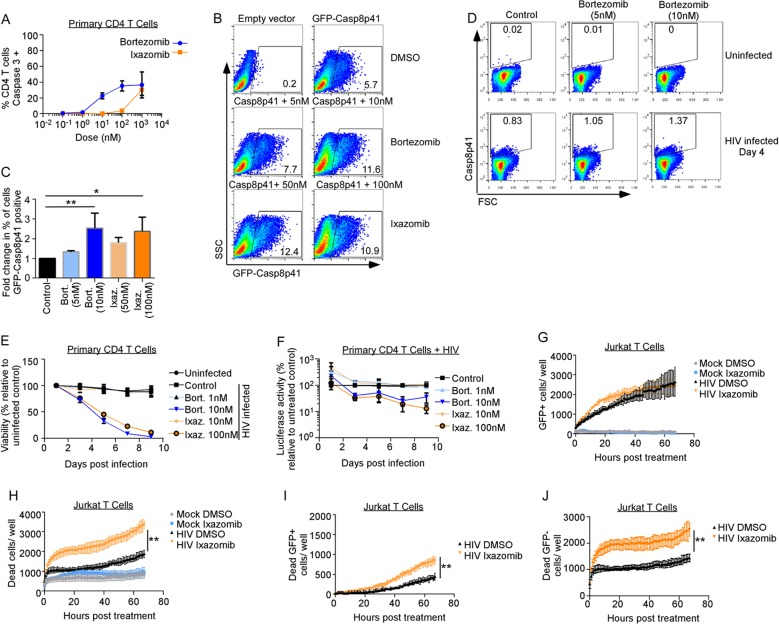 Proteasome inhibitors increase Casp8p41 levels and kill <t>HIV-infected</t> CD4 T cell cultures more than uninfected cultures. (A) Uninfected primary CD4 + T cells were treated with bortezomib or ixazomib at increasing concentrations for 48 h, and cell death was assessed by activated caspase 3 detection by intracellular flow <t>cytometry.</t> Depicted are the means and SD of the results of two experiments. (B and C) Jurkat CD4 + T cells were transfected with empty vector or GFP-Casp8p41 and then treated with control (DMSO), bortezomib, or ixazomib, and the percentage of cells that were GFP positive was analyzed 6 h later. (C) Mean (plus SD) data from three independent replicates of the experiment shown in panel B compared by a Kruskal-Wallis test. (D) Primary CD4 T cells were infected with HIV IIIb , treated with control or bortezomib, and assessed for intracellular Casp8p41 expression by flow cytometry. (E) Primary CD4 T cells were infected with HIV-Luc; treated with DMSO, bortezomib, or ixazomib; and monitored for viability by ATP content over time. (F) Primary CD4 T cells infected with HIV-Luc were treated with DMSO, bortezomib, or ixazomib and monitored for luciferase activity over time. (G and H) Jurkat T cells were mock or GFP-HIV infected, treated with DMSO or ixazomib, and monitored for GFP (G) or cell death (by cell permeability dye) (H) over time. (I and J) Cell death selectively measured in GFP-expressing cells (I) and GFP-negative cells (J) in panels G and H was monitored over time. *, P
