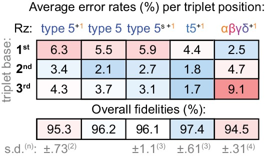 Fidelity of type 5 variants. Positional error rates and fidelities (determined as in Figure 8a ) for type 5 ribozyme variants; the overall fidelity was calculated as a geometric mean of positional errors at each triplet position (n and s.d. of this value shown for ribozymes assayed multiple times, see Figure 8—source data 1 ). Fidelity of the initial type 5 isolate (tethered to the assay templates) is modestly improved in the absence of type 1. However, with type 1, fidelity is improved when operating fully in trans (type5 s +1 ). Reselection and stabilisation of the ε domain yields a further fidelity improvement (t5 +1 ) but ε truncation (αβγδ +1 ) reverts the pattern of error tendencies along the triplet towards that of the starting core. See Supplementary file 1 for ribozyme sequences.