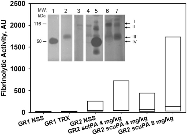 Assessments of fibrinolytic activity in BAL samples. Generation of fibrinolytic activity by BAL fluids in the presence of human plasminogen. Box plots: relative fibrinolytic activity (FA), produced by BAL fluids (Gr1: 5 saline-controls, GR1 TRX: 11 scuPA and tPA treated animals; Gr2: 6 saline controls, 5 and 7 animals treated with 4 and 8 mg of nebulized scuPA respectively, and 5 animals treated with 4 mg nebulized tPA) in the presence of 100 nM human Glu-plasminogen. Data are presented as box plots (showing interquartile ranges). No statistically significant differences were noted in the median value of FA between the groups. Inset: enzymographic analyses of BAL fluids from animals with ISIALI. BALs were collected at 48 h after initiation of the treatment at the time of euthanasia. Arrows to the right of the panels indicate positions of: tPA/PAI-1 inhibitory complexes (110 kDa) (I), uPA/PAI-1 inhibitory complexes (100 kDa) (II), tPA (63 kDa) (III), uPA (50 kDa) (IV). To illustrate the range of activity in the treatment groups, samples the range of ones with low levels of PA and relatively higher PA levels from sheep included in Group 2. Lanes: recombinant human uPA (0.5 ng) and tPA (0.1 ng) standards are shown in lanes 1 and 2, respectively. 3: saline treated animal, 4 and 5—8 mg scuPA-treated animals, 6 and 7—4 mg tPA-treated animals. The data are representative of the findings in all similarly treated Group 2 animals