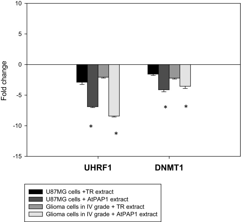 Expression profiles of UHRF1 and DNMT1 genes. qRT-PCR analysis of UHRF1 and DNMT1 in glioma cells in IV grade and U87MG cells cultured for 24 h in the presence of L. sibiricus TR and AtPAP1 root extracts. Each gene was normalized to the expression of a 18S RNA- reference gene. Data is presented as fold change in glioma cells in IV grade and U87MG cells vs. untreated cells, in which expression levels of the genes were set as 1. The mean values ± SD were calculated from three independent experiments. * p