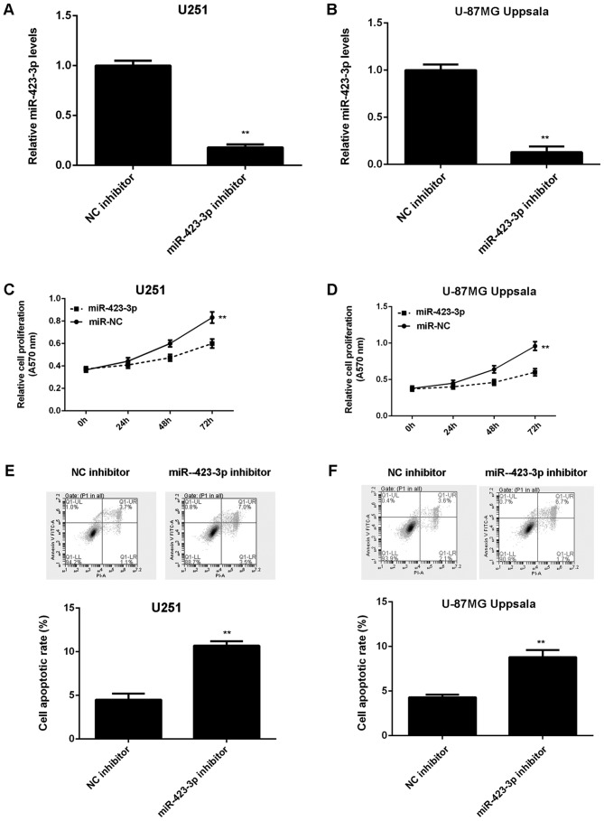 Comparisons between miR-423-3p expression levels, cell proliferation and cell apoptosis in cells with a miR-423-3p inhibitor and an NC inhibitor. The reverse transcription-quantitative polymerase chain reaction was performed to examine the miR-423-3p expression levels in (A) U251 and (B) U87MG Uppsala cells transfected with either miR-423-3p inhibitor or NC inhibitor. An MTT assay was used to determine proliferation in (C) U251 and (D) U87MG Uppsala cells. Flow cytometry was used to detect apoptosis in (E) U251 cells and (F) U87MG Uppsala cells. **P