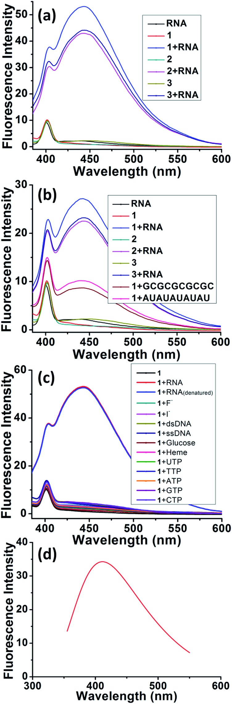 Experimental and theoretically calculated fluorescence spectra. (a) Fluorescence of tRNA from baker's yeast (10 μM), probes 1–3 (10 μM) and probes 1–3 with tRNA from baker's yeast. (HEPES buffer pH = 7.4, slit width = 5 nm) (b) fluorescence of <t>RNA</t> from torula yeast (10 μM), probes 1–3 (10 μM), probes 1–3 with RNA from torula yeast and fluorescence of probe 1 with tRNA (GCGCGCGCGC and AUAUAUAUAU). (HEPES buffer pH = 7.4, slit width = 5 nm) (c) fluorescence of probe 1 (10 μM) in the presence of RNA, denatured RNA, F – , Cl – , heme, glucose, ssDNA, dsDNA, <t>UTP,</t> TTP, ATP, GTP and CTP (10 equiv.) (HEPES buffer pH = 7.4, slit width = 5 nm). (d) Fluorescence results from TD-DFT calculations.