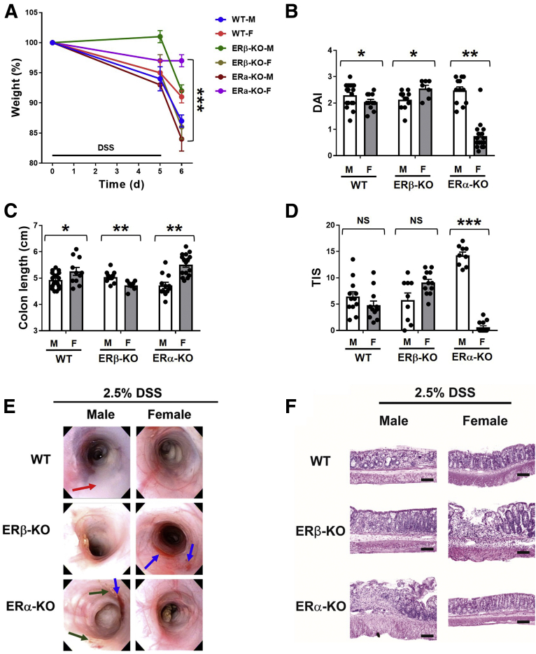 DSS-induced colitis in WT, ERβ-KO, and ERα-KO male and female mice. Ten- to 12-week-old male (M) and female (F) WT, ERβ-KO, and ERα-KO mice were fed 2.5% DSS-supplemented drinking water for 5 days and killed on day 6. ( A ) Body weights were recorded at days 0, 5, and 6 and are expressed as the percentage of initial (day 0) weight. ( B ) The disease activity index (DAI) was calculated for each mouse at day 6 (encompassing body weight loss, stool consistency, and hemoccult scores). Analysis of variance (ANOVA) F = 36.3; P