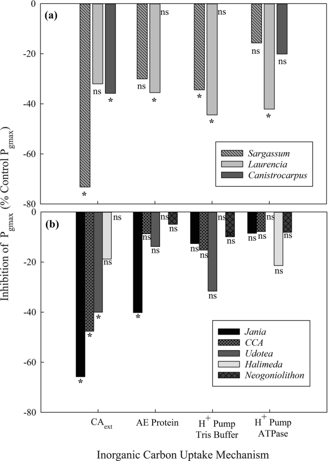 Inhibition of P gmax in three fleshy ( a ) and five calcifying ( b ) tropical macroalgae as inhibitor block various bicarbonate uptake pathways: external carbonic anhydrase (CA ext ) with acetazolamide (AZ), AE protein by pyridoxal (5) phosphate (PLP), proton pump acidification by Tris buffer and ATPase H + pumps by sodium orthovanadate.