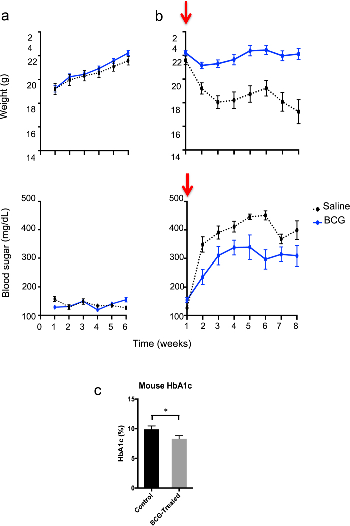 BCG pre-administration reduces hyperglycemia in chemically-induced (Streptozocin) mice but does not induce hypoglycemia in normal mice. a Normal BALB/c mice were first studied in a normoglycemic state with ( n = 12) and without BCG ( n = 12) treatment for blood sugars and weight (left panels). BALB/c mice were rendered chemically diabetic (arrows) and studied with and without BCG treatment six weeks earlier with preventative pre-injections (right panels). Most mice became severely hyperglycemic after treatment with streptozocin (STZ) which selectively kills the insulin-secreting cells in the pancreas. All mice were monitored for blood sugar levels and weighed on a weekly basis. BCG-treated mice gained weight at the same rate as untreated control mice and had normal blood sugars with no indication of hypoglycemia (left panels, blue lines). After STZ induction of hyperglycemia, the control mice rapidly started to lose weight and became severely hyperglycemic within one week (right, black lines). In contrast, mice first treated with BCG before STZ treatment were able to maintain their weight and had markedly lower levels of hyperglycemia (right, blue line). b Measurements of <t>HbA1c</t> values in STZ-treated BALB/c mice after 6 weeks with and without prior BCG treatment show the protection afforded by BCG and the resulting lower HbA1c values of 85 ± 6.6 mmol/mol (9.9 ± 0.6% NGSP) without BCG vs. 67 ± 5.5 mmol/mol (8.3 ± 0.5% NGSP) with BCG treatment; p = 0.02, n = 19 surviving mice). c At 8 weeks after the induction of hyperglycemia, the BCG-treated mice had statistically lowered HbA1c values