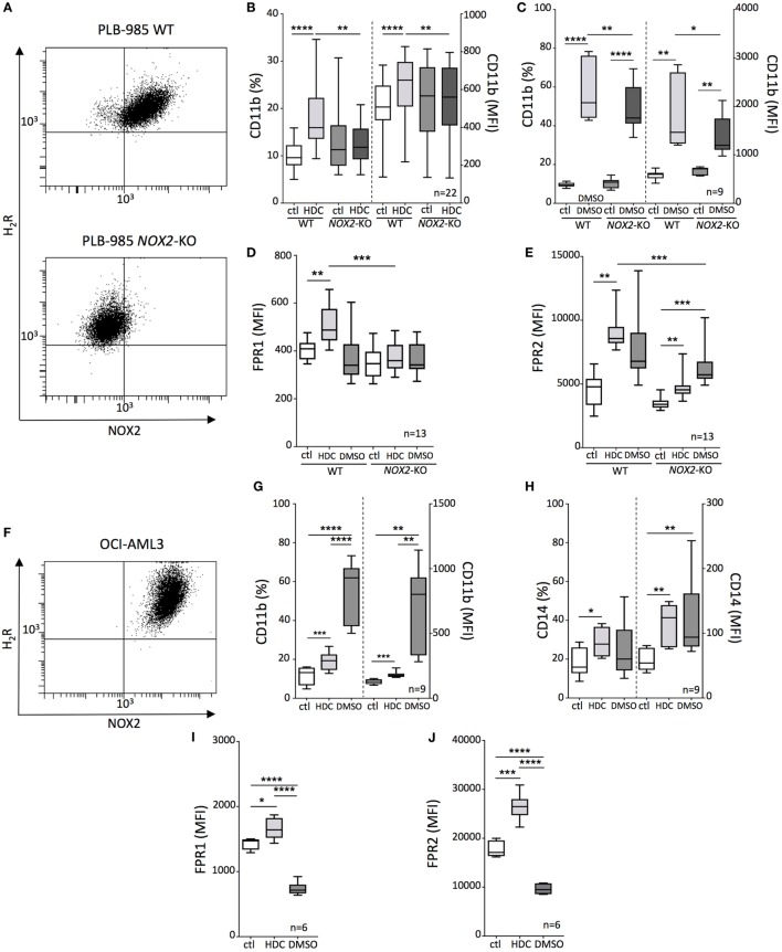 Histamine dihydrochloride (HDC)-induced differentiation of leukemic cells is NOX2-dependent. (A) FACS-plots showing NOX2 and H 2 R expression on wild-type (WT) and NOX2 -KO PLB-985 cells. Expression of CD11b (B,C) , FPR1 (D) , and FPR2 (E) on WT and NOX2 -KO PLB-985 cells cultured in the presence or absence of HDC or dimethyl sulfoxide (DMSO) as determined by flow cytometry. (F) FACS-plot showing NOX2 and H 2 R expression by OCI-AML3 cells. Expression of CD11b (G) , CD14 (H) , FPR1 (I) , and FPR2 (J) on OCI-AML3 cells cultured in the presence or absence of HDC or DMSO. Abbreviations: MFI, median fluorescence intensity. ANOVA; * p