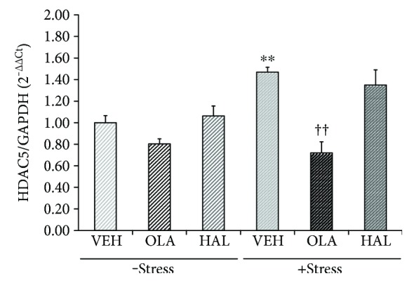 Effects of antipsychotic drugs on histone deacetylase 5 (HDAC5) mRNA levels in the rat hippocampus. Rats were given a daily injection of either VEH, OLA, or HAL for 21 d in conjunction with either + stress or − stress. HDAC5 mRNA levels in the rat hippocampus were assessed using a qRT-PCR procedure. The quantitative analysis was normalized to GAPDH. ∗∗ p