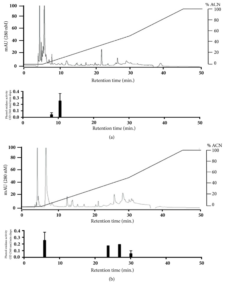 HPLC chromatography profiles of susceptible MJ (a) and resistant SA tick strains (b). At higher concentrations of ACN (acetonitrile), multiple peaks eluted in susceptible strain MJ ((a), upper), while at low concentrations of ACN, peaks were observed in resistant strain SA ((b), upper). The oxidizing activity exhibited through L-DOPA oxidation is depicted below the chromatograms ((a) and (b), lower); the graph exhibits an increase of oxidative activity approximately at 10 min retention time in the susceptible MJ when compared to the resistant SA; additionally, the resistant strain SA exhibits several peaks of oxidative activity which are not present in the susceptible strain MJ during the 20 to 30 min retention time.