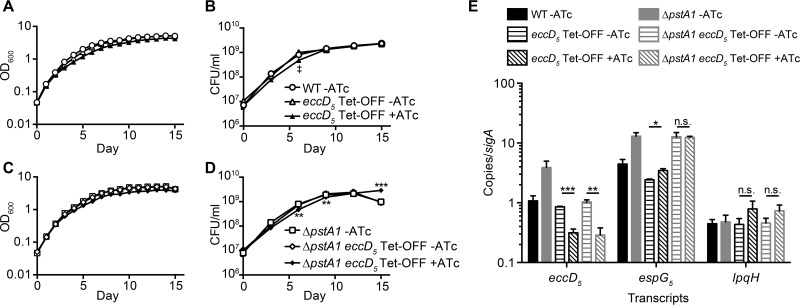 Incomplete repression of eccD 5 transcription has moderate effects on growth. (A to D) Wild-type M. tuberculosis Erdman (WT) and the Δ pstA1 , eccD 5 Tet-OFF, and Δ pstA1 eccD 5 Tet-OFF strains were inoculated in 7H9 complete medium at an OD 600 of 0.05 and grown at 37°C with aeration. Anhydrotetracycline hydrochloride (ATc; 100 ng/ml) was added at day 0 and day 7 as indicated. Growth was monitored by daily OD 600 measurements (A and C) and by plating serially diluted cultures on 7H10 medium to determine numbers of viable CFU per milliliter on days 0, 3, 6, 9, 12, and 15 (B and D). The key in panel B applies to panels A and B; the key in panel D applies to panels C and D. **, P