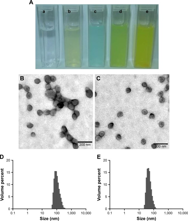 The morphology of nanoparticles: ( A ) a, water; b, PPP-NPs; c, PPP Cy5 -NPs; d, PPP Cy5 -RH-NPs; e, PPP-RH-NPs. TEM photograph, magnification ×100,000 ( B , C ) and size distribution ( D , E ) of PPP-RH-NPs without, or with, high-pressure homogenization treatment. Scale bar is 200 nm. PPP-NPs, PEG-PCL-PEI nanoparticles without loading RH; PPP-RH-NPs, RH-loaded PEG-PCL-PEI nanoparticles. Abbreviations: Cy5, cyanine 5; PEG-PCL-PEI, polyethyleneglycol- co -polycaprolactone- co -polyethylenimine; RH, rhein; TEM, transmission electron microscopy.