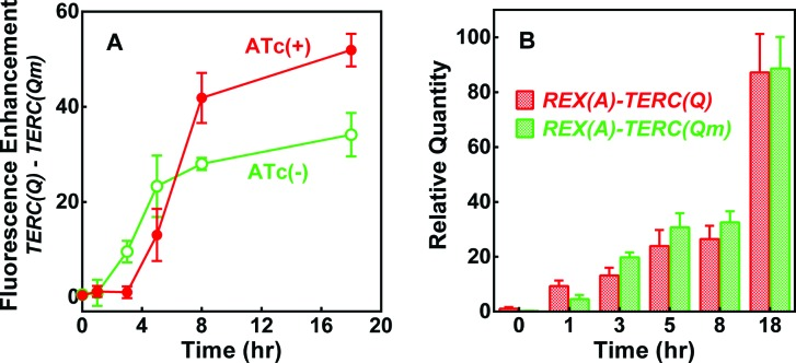 Dependence of BiFC fluorescence enhancement on target RNA expression in E. coli . (A) Time course of the difference in mean fluorescence between cells expressing RNA REX(A) – TERC(Q) and REX(A) – TERC(Qm) in the presence and absence of RNA induction by ATc. (B) RNA level in cells before and after induction with ATc. Data are given in mean ± SD of three experiments. IPTG was added at 0 h with or without ATc. Representative distribution of eGFP fluorescence of corresponding cells is given in Fig. S4B. †