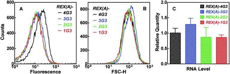 Dependence of BiFC fluorescence on the number of G 3 tracts in the RNA target expressed in E. coli . Distribution of (A) eGFP fluorescence or (B) forward scattering intensity or (C) relative RNA expression (mean ± SD of three experiments) was assayed and processed as in Fig. 4 .