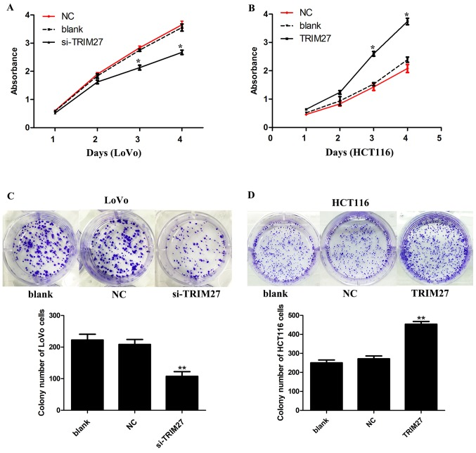 TRIM27 promotes proliferation and colony formation in colorectal cancer cells. The cell counting kit-8 assay detected the cell viability of (A) LoVo and (B) HCT116 cells following TRIM27 knockdown or overexpression. Colony-forming abilities of (C) LoVo and (D) HCT116 cells were detected following TRIM27 knockdown or overexpression. Data are presented as the mean ± standard deviation from three independent experiments; * P