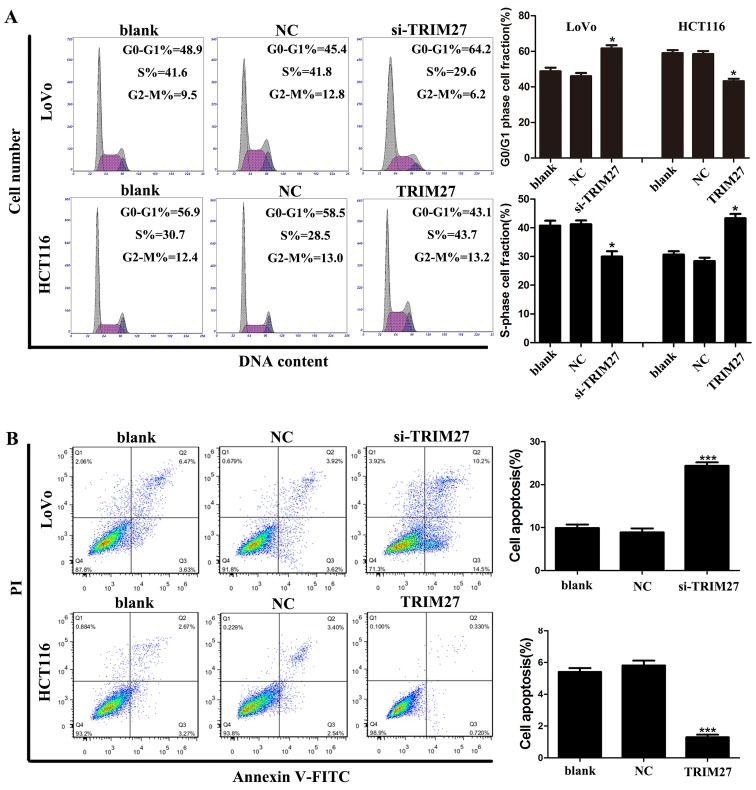 TRIM27 induces cell apoptosis resistance and accelerated cell cycle in colorectal cancer cells. (A) Cell cycles of LoVo and HCT116 cells were detected using flow cytometry, and the comparative analysis of cell numbers in the G0/G1 and S phase are shown. (B) Total cell apoptosis of LoVo and HCT116 cells was detected by flow cytometry, and the comparative analysis of apoptotic cells is shown. Data are presented as the mean ± standard deviation from three independent experiments; * P