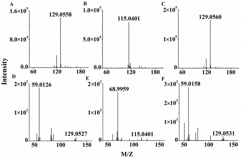 The mass spectra of the branched-chain keto acids standards using HPLC-Q-TOF/MS. ( A ) Full scan mass spectra of α-keto-β-methylvalerate (KMV); ( B ) Full scan mass spectrum of α-ketoisovalerate (KIV); ( C ) Full scan mass spectrum of α-ketoisovalerate (KIC); ( D ) MS/MS spectrum of KMV; ( E ) MS/MS spectrum of KIV; ( F ) MS/MS spectrum of KIC.