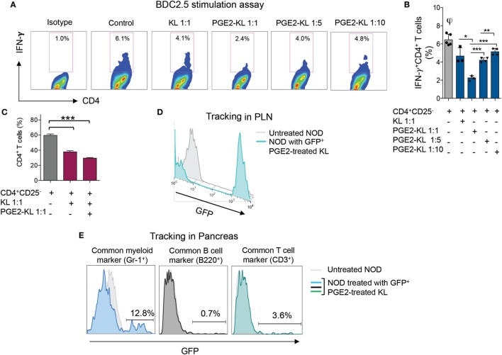 Effects of murine KL cells. (A,B) Representative flow cytometric analysis (A) and quantitative bar graph (B) for IFN-γ + CD4 + T cells isolated from NOD-BDC2.5 TCR Tg mice and stimulated with BDC2.5 peptide in the presence of DCs (Control) or upon coculture with unmodulated KL or with PGE2-KL (at different ratios). (C) Quantitative bar graph of the percentage of CD4 + T cells upon coculture with KL or PGE2-KL. (D) Representative flow cytometric analysis of GFP + PGE2-KL in the PLN of treated NOD mice following 24 h of treatment with GFP + PGE2-KL, demonstrating that they traffic to the PLN following adoptive transfer into NOD mice. (E) Representative flow cytometric analysis of GFP + PGE2-KL in the pancreas of NOD mice 24 h post-infusion with GFP + PGE2-KL, demonstrating the surface phenotype of GFP + cells. Abbreviations: KL, Lineage − c-kit + cells; PGE2-KL, PGE2-modulated KL cells; HSPCs, hematopoietic stem and progenitor cells; GFP, green fluorescent protein; PGE2, prostaglandin E2; DCs, dendritic cells.