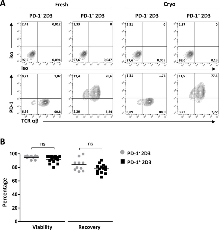 Efficiency of PD-1 transduction, TCR mRNA electroporation and cryopreservation of 2D3 cells ( A ) Representative flow cytometry T-cell receptor (TCRαβ) and programmed death-1 (PD-1) protein surface expression profiles and corresponding isotype controls of non-transduced PD-1 − 2D3 and PD-1-transduced (PD-1 + ) 2D3 cells 24 hours after TCR mRNA electroporation (fresh; 10-14 replicates) and after thawing of TCR mRNA-electroporated cells (cryo; 6 replicates). ( B ) Percentage viability and recovery upon TCR mRNA electroporation of PD-1 − and PD-1 + 2D3 cells. Data information: in (B), means are depicted. * P ≤ 0.05 (Student's t -test). Abbreviations: cryo, transfected effector cells were cryopreserved prior to co-culture; fresh, stimulator cells were co-cultured immediately following transfection; ns, not significant; PD-1, programmed death-1 protein; TCR, T-cell receptor.