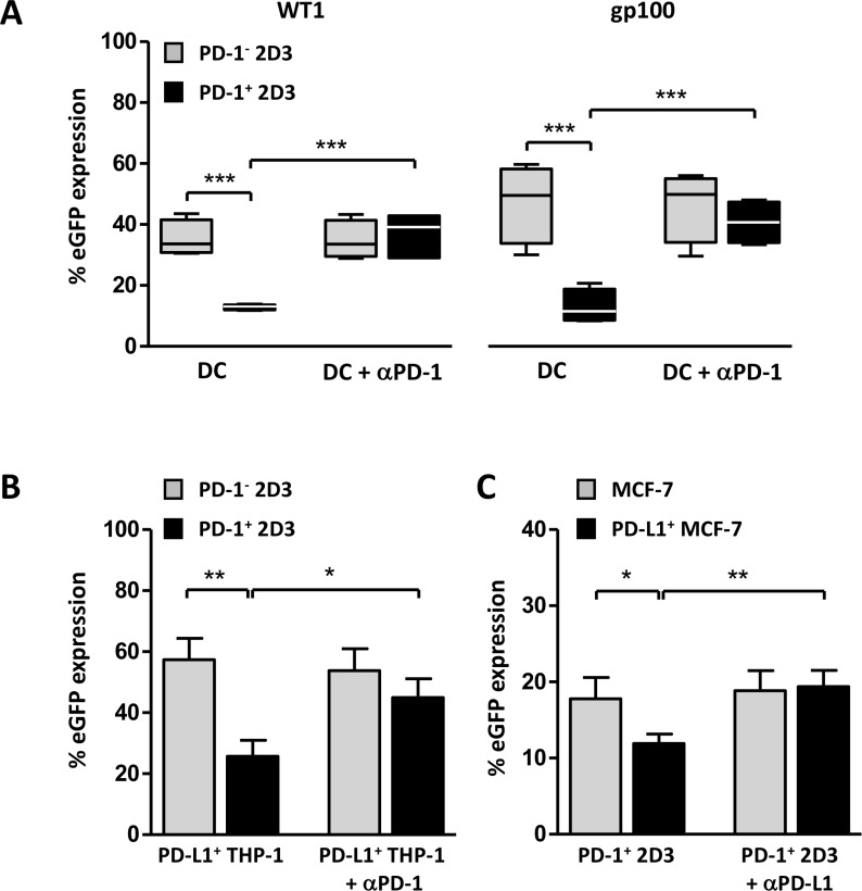 TCR + PD-1 + 2D3 cells as a model assay for evaluation of involvement of PD-1 signaling in cell-mediated antigen-specific T-cell activation ( A – C ) WT1 (A, B) and gp100 (A, C) specific T-cell activation expressed as percentage viable CD8 + eGFP + PD-1 − and PD-1 + 2D3 cells (± SEM) after 24 hours co-culture with different PD-L1 + stimulator cells. Neutralizing antibody against PD-1 (αPD-1; A, B; 15 µg/mL in WT1 model (A, B), 5 µg/mL in gp100 model (A)) or PD-L1 (αPD-L1; C) was added to cells 1 hour prior to co-culture to verify PD-1-mediated signaling, where indicated. (A) PD-1-dependent stimulating capacity of two differently generated peptide-pulsed mature monocyte-derived dendritic cells (WT1 (4 DC donors tested in two independent experiments); gp100 (4 DC donors in four independent experiments)). (B)Impact of induced PD-L1 expression on peptide-pulsed THP-1 leukemic cells on WT1-specific T-cell activation (6 replicate experiments). (C) gp100-specific PD-1 + T cell-activating capacity of peptide-pulsed wild-type or stably transduced PD-L1 + MCF-7 breast carcinoma cells (4 replicate experiments). Data information: in A, the horizontal line represents the median percentage eGFP expression ( n = 4). * P ≤ 0.05, ** P