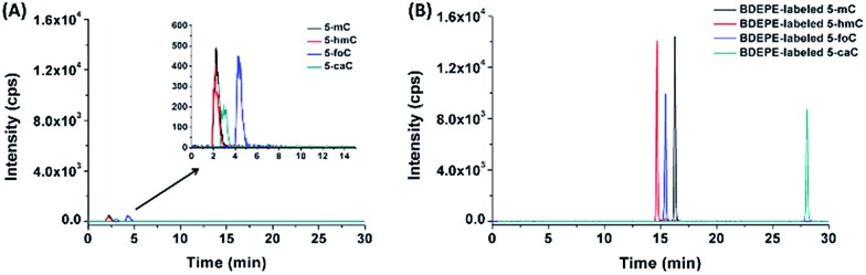 Extracted ion chromatograms of 5-mC, 5-hmC, 5-foC, and 5-caC before (A) and after (B) labeling using BDEPE under the optimized conditions. The amount of 5-mC, 5-hmC, 5-foC, and 5-caC were 200 fmol.