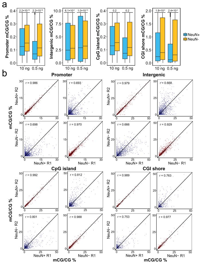 CG methylation levels across various annotated genomic features for NeuN+ and NeuN− fractions from mouse cerebellum (a) Box plots of CG methylation levels in promoters (n = 23525), intergenic regions (n = 19239), CpG islands (n = 16027), and CpG island shores (n = 30232). The boxes represent first quartile, median, and third quartile. Dots represent outliers. P-values are calculated using paired two-sided t-test and shown on top of the plots. (b) Scatter plots of CG methylation levels in promoters, intergenic regions, CpG islands, and CpG island shores. The MID-RRBS data were generated using 0.5 ng NeuN+/NeuN− DNA. r represents Pearson coefficient. R1 and R2 are two replicates.