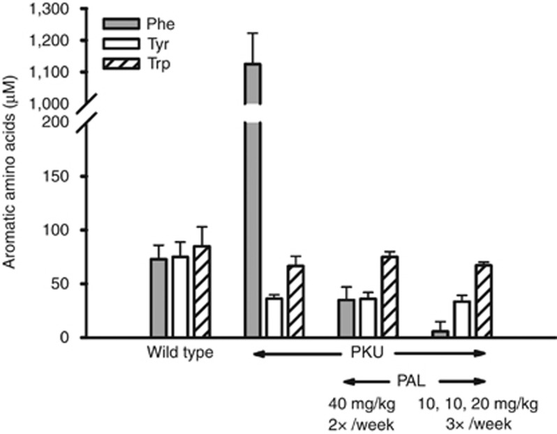 Aromatic amino-acid levels in plasma of wild-type (WT) and phenylketonuria (PKU) female mice. Plasma samples, obtained from untreated WT and PKU mice and pegvaliase-treated PKU mice, were analyzed by high-performance liquid chromatography (HPLC) separation. Plasma samples from untreated PKU mice show markedly increased levels in plasma phenylalanine (Phe) relative to WT mice, along with a 40–50% decrease in plasma tyrosine. Plasma tryptophan levels remained similar between the two genotypes. Pegvaliase treatment decreased plasma Phe to physiological or below normal physiological levels according to dose regimen. Tyrosine and tryptophan levels in untreated and pegvaliase-treated PKU mice were similar.