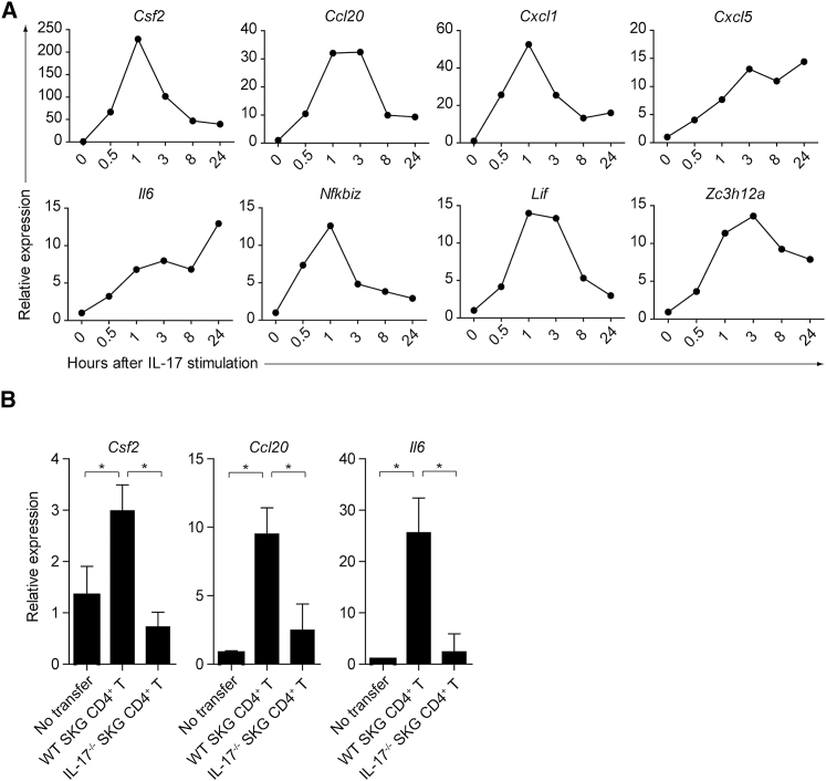 Induction of GM-CSF in FLSs Stimulated with IL-17 (A) Quantitative RT-PCR analysis for the expression of designated genes in IL-17-stimulated FLSs. FLSs (2.5 × 10 4 ) were stimulated with 50 ng/mL rmIL-17 and harvested at the indicated time points. mRNA expression is presented relative to the expression of Hprt1 . (B) Quantitative RT-PCR analysis for the expression of designated genes in synoviocytes from Rag2 −/− mice with CD4 + T cell transfer. CD45 − Podoplanin + synoviocytes (3 × 10 4 ) were sorted from inflamed joints of Rag2 −/− mice 4 weeks after transfer of 1 × 10 6 SKG or Il17a −/− SKG CD4 + T cells. Vertical bars mean SD (n = 3). Data are representative of two independent experiments.