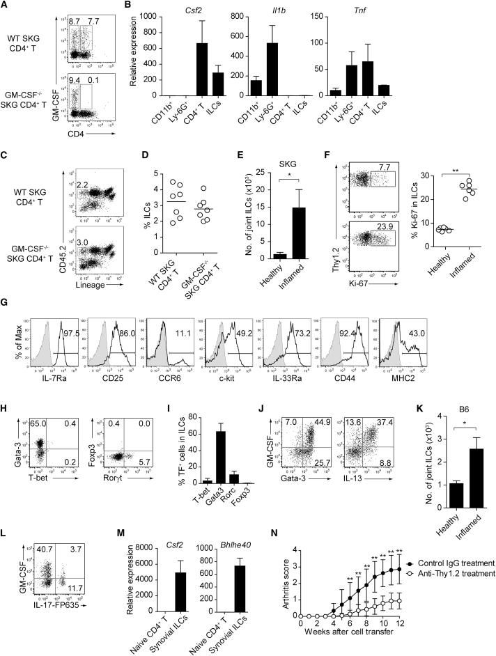 GM-CSF-Producing ILCs in Inflamed Joints (A) Flow cytometry analysis of GM-CSF expression by CD4 + T cells and CD4 − cells among CD45 + joint infiltrating cells in Rag2 −/− mice transferred with CD4 + T cells from WT or Csf2 −/− SKG mice. (B) Quantitative RT-PCR analysis of Csf2 , Il1b , and Tnf in CD11b + Ly-6G − (CD11b + ), CD11b + Ly-6G + (Ly-6G + ), CD4 + T cells, and ILCs sorted from arthritic joints of mannan-treated SKG mice (n = 3). mRNA expression is presented relative to the expression of Hprt1 . (C) Flow cytometry of joint infiltrating cells in Rag2 −/− mice transferred with CD4 + T cells from WT or Csf2 −/− SKG mice. Cells were stained for CD45.2 and lineage markers (a cocktail of CD3, CD4, CD8, CD11b, CD11c, CD19, and DX-5). (D) Proportion of ILCs in Rag2 −/− mice transferred with CD4 + T cells as shown in (C). Each symbol represents an individual mouse. Horizontal bars indicate the means. (E) Total cell number of ILCs from healthy or inflamed joints of SKG mice (n = 3). (F) Flow cytometry of synovial ILCs (CD45.2 + lineage markers-negative Thy1.2 + cells as shown in C) for Ki-67 expression. (G) Flow cytometry of synovial ILCs (CD45.2 + lineage markers-negative Thy1.2 + cells as shown in C) for cell surface expression of IL-7Ra, CD25, CCR6, c-kit, IL-33Ra, CD44, and MHC2. (H) Flow cytometry of synovial ILCs (as shown in C) for intranuclear expression of the transcription factor T-bet, Gata-3, Rorγt, and Foxp3. (I) Proportion of the transcription factor-expressing synovial ILCs (n = 3) as shown in (H). (J) Flow cytometry of synovial ILCs (as shown in C) for the expression of GM-CSF, Gata-3, and IL-13. (K) Total cell numbers of ILCs from healthy or inflamed joints of C57/BL6 (B6) mice with collagen antibody-induced arthritis (n = 3). Data are representative of two independent experiments. (L) Flow cytometry of synovial ILCs for the expression of GM-CSF and FP635 in arthritic Il17a Cre R26R FP635 SKG mice. (M) Quantitative RT-PCR analysis of Csf2 and Bhlhe