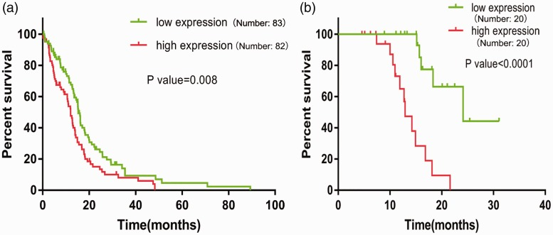 High level of <t>CLEC18B</t> predicted shorter overall survival (OS) in GBM patients. (a) Kaplan–Meier curves for OS according to CLEC18B expression in patients with GBM collected from TCGA. (b) Kaplan–Meier curves for OS according to CLEC18B expression in GBM patients collected at our institution. CLEC18B = C-type lectin domain family 18 member B; GBM = glioblastoma multiforme; TCGA = The Cancer Genome Atlas.