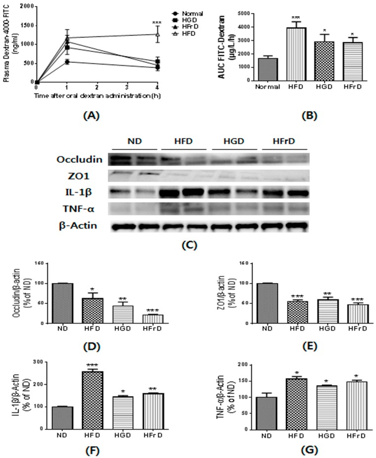 HFD, HGD or HFrD-induced changes of gut permeability and related proteins expression. ( A ) plasma fluorescein isothiocyanate (FITC)-dextran concentration; ( B ) AUC of Plasma FITC-dextran levels; ( C ) representative images of Western blots for tight junction proteins (Occludin and ZO1) and inflammatory cytokines (IL-1β and TNF-α); ( D – G ) relative band intensities of Occludin ( D ), ZO1 ( E ), IL-1β ( F ) and TNF-α ( G ) normalized to those of β-actin. Data are presented as mean ± SEM for 9 mice per group ( A , B ) and mean percentage of ND ± SEM of three independent experiments (C-G) (* p