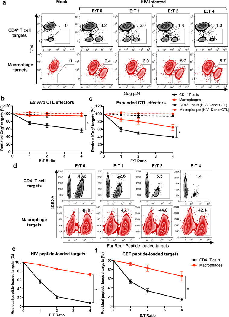 HIV-infected macrophages are less susceptible to CTL-mediated killing compared to HIV-infected CD4 +  T cells (a)  HIV-infected target elimination assay. HIV-infected CD4 +  T cells and macrophages were co-cultured with CTL effectors for four hours, followed by quantitation of infected cells by flow cytometry. Live infected cells are depicted in the gate outlining positive Gag-p24 intracellular staining with down-modulation of surface CD4, representing one of four independent experiments. See also  Supplementary Figs. 1  and  2 .  (b) Summary of elimination assays using ex vivo CTL (n=16 distinct samples from four independent experiments) and  (c)  HIV peptide-expanded CTL from HIV-infected donors (n=16 distinct samples from four independent experiments) and CTL from HIV −  healthy donors (n=3 distinct samples from two independent experiments) as a negative control. Shown are the means +/- SEM. Statistical analysis: two-sided unpaired t-test, *p