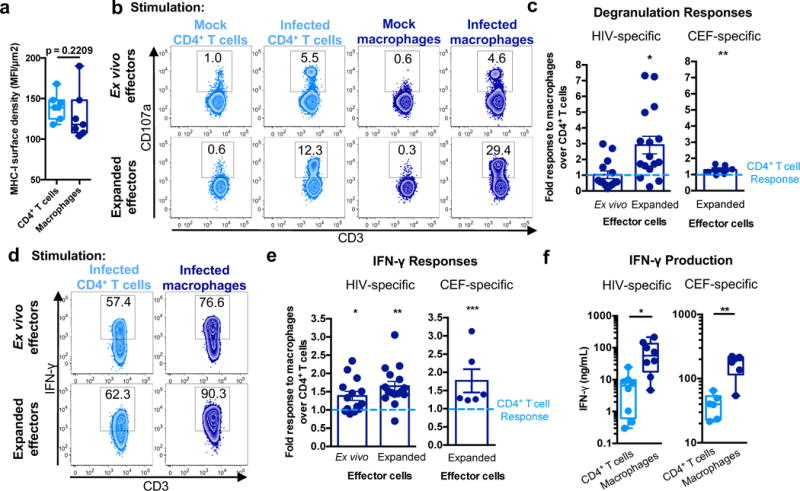 HIV-infected macrophages induce stronger CTL cytokine responses than infected CD4 +  T cells (a)  MHC-I surface density. Imaging flow cytometry was used to calculate relative surface densities of MHC-I on CD4 +  T cells and macrophages (see  Supplementary Fig. 6a and b ) (n=7 distinct samples from three independent experiments). Box elements, median and 25 th -75 th  percentiles. Statistical analysis, two-sided Mann-Whitney test. p=0.2209.  (b)  CTL recognition assay. Ex vivo and expanded CTL were incubated with mock/uninfected or HIV-infected CD4 +  T cells or macrophages for six hours followed by analysis of degranulation (CD107a expression). See also  Supplementary Fig. 6c . Shown is one of five independent experiments.  (c)  Comparison of CTL responses to CD4 +  T cells and macrophages. Data shown are the ratios of CTL degranulation in response to macrophages over CD4 +  T cells for ex vivo (n=14 distinct samples from five independent experiments) and expanded CTL (n=16 distinct samples from five independent experiments). Responses against CEF peptide-loaded targets were also assessed (n=6 distinct samples from three independent experiments). Shown are the means +/- SEM. Statistical analysis: two-sided one sample t-test, *p=0.0036, and two-sided Wilcoxon signed rank test, **p