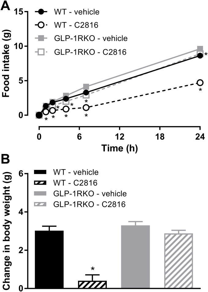 GLP-1:CCK fusion peptide C2816 reduces food intake acute in wildtype (WT) mice to a greater extent than GLP-1R-deficient (GLP-1RKO) mice, suggesting that the CCK portion of C2816 is biologically active. (A) 24 h food intake and (B) change in body weight of overnight-fasted WT or GLP-1RKO mice after a single administration of vehicle or C2816 (50 nmol/kg). *p