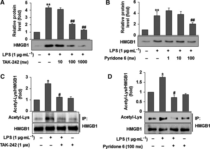 Acetylation and secretion of HMGB 1 through TLR 4/ JAK / STAT 1 signaling in LPS ‐activated RAW 264.7 cells. (A,B) Cells were treated with TAK ‐242 (10, 100 or 1000 n m ) (A) or pyridone 6 (1, 10 or 100 n m ) (B) for 30 min prior to LPS (1 μg· mL −1 ) treatment. After incubation for 12 h, medium was collected for the detection of HMGB 1. Equal volumes of medium were subjected to western blot analysis using an anti‐ HMGB 1 antibody. (C,D) Cells were treated with TAK ‐242 (1 μ m ) (C) or pyridone 6 (100 n m ) (D) for 30 min prior to LPS (1 μg· mL −1 ) treatment. After incubation for 4 h, cell lysates were subjected to immunoprecipitation using an anti‐ HMGB 1 antibody and then to western blot analysis using an anti‐acetyl‐Lys antibody. The results are expressed as the means ± SEM of three independent experiments. * P