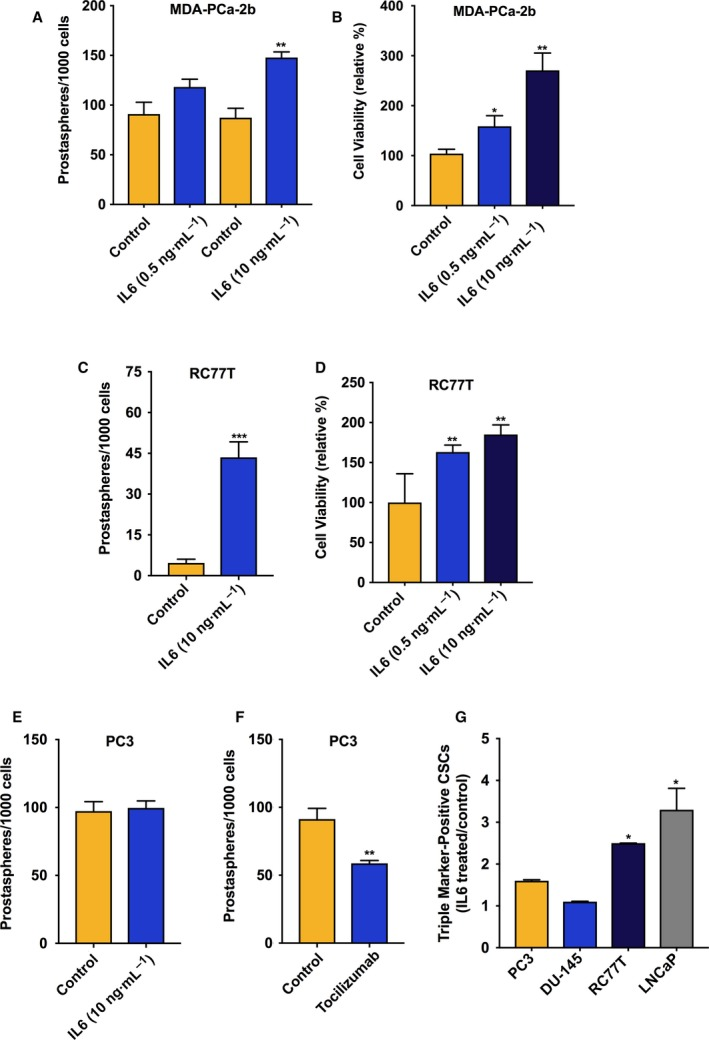 IL‐6 treatment induced prostasphere formation in IL‐6 nonexpressing PCa cell line cultures. (A) Effect of IL‐6 treatment relative to vehicle control on the numbers of prostaspheres in 7‐day cultures of MDA‐PCa‐2b cells. (B) Effect of IL‐6 treatment (72‐h) on viability of MDA‐PCa‐2b cells, run in triplicate and repeated twice. (C) Effect of IL‐6 treatment relative to vehicle control on the numbers of prostaspheres in 7‐day cultures of RC77T cells. (D) Effect of IL‐6 on viability of RC77T cells, 7‐day treatment run in triplicate and repeated twice. (E) Effect of 7‐day IL‐6 treatment on the numbers of PC3 prostaspheres. (F) Effect of IL‐6 receptor inhibitor tocilizumab (10 μ m , 7 days) on prostaspheres in PC3 cultures. (G) Impact of IL‐6 treatment on the percentage of <t>CSCs</t> in other cell lines in our panel measured by <t>FACS</t> analysis. Cells were treated with IL‐6 at 10 ng·mL −1 for 7 or 14 days for RC77T. The fraction of CSCs relative to total cell count was measured based on CSC triple‐marker‐positive status (CD44+/CD133+/EpCAM+). The results are presented as fold‐change, IL‐6 treated vs. control. Prostasphere assay and FACS data are representative of repeated experiments and are the average of three independent biological replicates. * P ≤ 0.05, ** P ≤ 0.01.