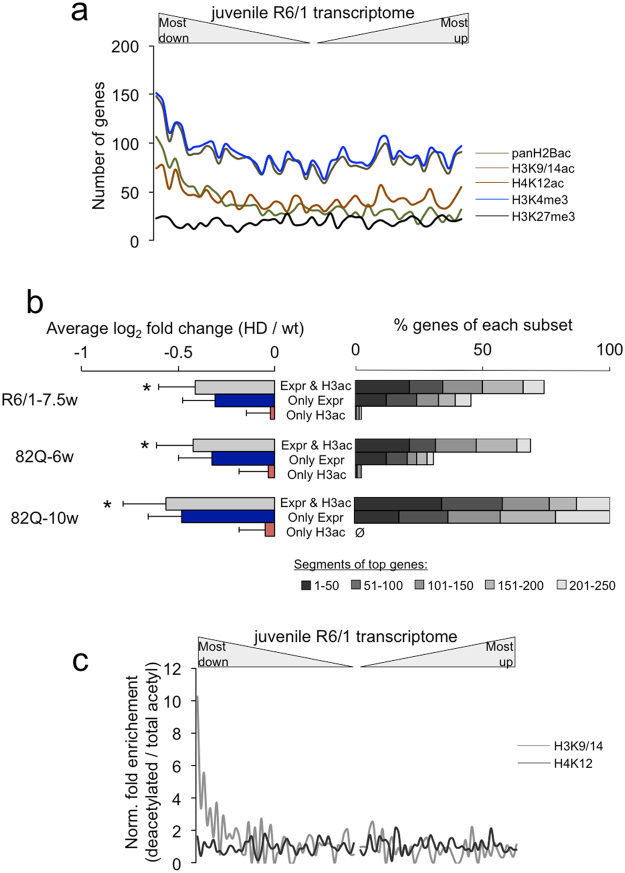 Profiling of histone posttranslational modifications in the early hippocampal HD transcriptome. ( a ) Distribution across the juvenile R6/1 transcriptome of the genes associated with reported histone modifications (panH2Bac, H3K9/14ac, H4K12ac, H3K4me3 and H3K27me in 3–5-month-old mice 46 ) at TSS (overlapping with the transcription start sites or comprising the whole gene). ( b ) From a previous study reporting changes in 10-week-old N171-82Q hippocampi 26 , we grouped three types of genes: those showing both gene downregulation and histone H3 deacetylation at the TSS (Expr H3ac), those showing only downregulation (Only Expr), and those showing only deacetylation (Only H3ac). On the left, fold change in differential expression was averaged within these subsets and represented as the mean ± s.d. for the indicated HD models and ages. * P