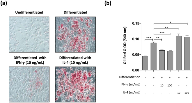 Effect of interferon (IFN)-γ and interleukin (IL)-4 treatment on 3T3-L1 adipogenesis. ( a ) 3T3-L1 cells were treated with insulin to differentiate them into adipocytes in the presence of either IFN-γ or IL-4 and stained with Oil Red O. Original magnification × 20. ( b ) Oil Red O in the adipocyte-differentiated 3T3-L1 cells was eluted using isopropanol and the optical density (OD) of the eluate was analysed. * p