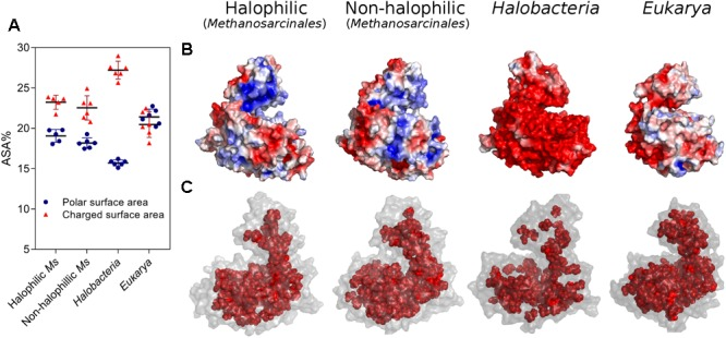 Halophilic traits of homology models constructed for ADP-PFK/GK from Halobacteria, Eukarya , halophilic and non-halophilic Methanosarcinales . (A) Polar and charged surface area expressed as percentage of ASA. (B) Electrostatic potential surface of representative models were generated, being blue for positive and red for negative charge (±3 k B T / e ). (C) Residues of the protein core (inner shell), using as criteria a surface residue exposition less than 5 Å 2 . A representative model of each group is shown; Natronorubrum bangense ( Halobacteria ), Homo sapiens ( Eukarya ), Methanohalobium evestigatum (halophilic Methanosarcinales ), and Methanosarcina mazei (non-halophilic Methanosarcinales ).