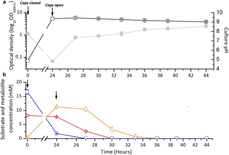 The growth, pH, and substrate concentrations of ADP1-g— C. butyricum cocultivations in 300 ml JM medium. Arrows indicate the time when the growth vessel caps were closed (for anaerobic phase) and opened (for second aerobic phase) during the experiment. a OD 600nm (open circle) and pH (closed square) trends of one-pot batch ADP1-g— C. butyricum cocultivations. b Glucose utilization ( C. butyricum, open square) and acetate–butyrate metabolism (acetate, open star; butyrate, open triangle) data from cocultivation experiment. The data points are averaged from triplicate experimental repeats. In some cases, the symbols overlap and the error bars (standard deviation) are smaller than the symbol