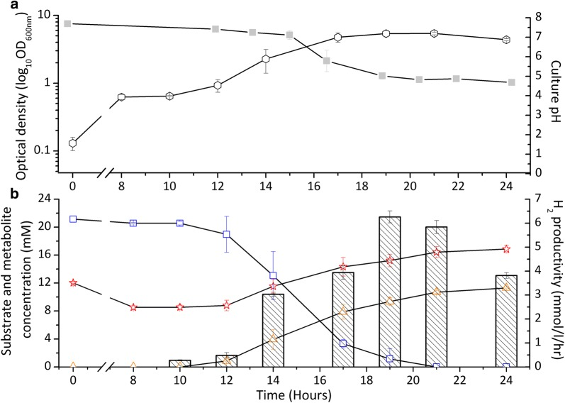 The growth, pH, substrate and metabolite concentrations and hydrogen production from the aerobic–anaerobic phases of the ADP1-g— C. butyricum cocultivations in 300 ml JM medium. Initial aerobic conditions turned to anaerobic via ADP1-g deoxygenation within 12 h of cultivation initiating glucose consumption and hydrogen production by C. butyricum . a OD 600nm (open circle) and pH (closed square) trends of one-pot batch ADP1-g— C. butyricum cocultivations. b Glucose utilization ( C. butyricum, open square), acetate–butyrate metabolism (acetate, open star; butyrate, open triangle) and hydrogen productivity mmol/l/h per culture volume (in bars) from cocultivation experiment. The data points are averaged from triplicate experimental repeats. In some cases, the symbols overlap and the error bars (standard deviation) are smaller than the symbol