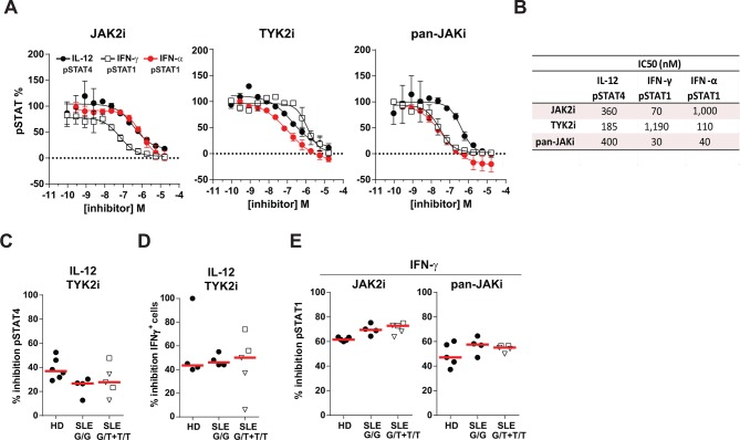 Janus kinase inhibitors block the IL-12 and IFN-γ response in peripheral blood mononuclear cells (PBMCs) from STAT4 risk patients with systemic lupus erythematosus (SLE). (A) Healthy donor PBMCs were treated with serial dilutions of the JAK2 selective (JAK2i), the TYK2 selective (TYK2i) and the pan-JAK inhibitor (pan-JAKi) before being stimulated with 5 ng/mL IL-12, 0.1 ng/mL IFN-γ or 200 U/mL IFN-α for 20 min. IL-12-stimulated cells were preactivated with PHA/IL-2. Phosphorylation of STAT4 (pSTAT4) and STAT1 (pSTAT1) was determined by flow cytometry in IL-12-stimulated cells and IFN-γ or IFN-α-stimulated cells, respectively. Data (mean±SD of two individuals) from IL-12 and IFN-α-stimulated cells are shown for CD3 + T cells and from IFN-γ-stimulated cells for monocytes. (B) IC 50 values for each inhibitor. (C–E) PBMCs from healthy donors (HD), patients with SLE homozygous for the protective STAT4 allele (G/G) and patients with SLE carrying one or two STAT4 risk alleles (G/T+T/T) were incubated with 200 nM TYK2i (C, D), 70 nm JAK2i or 30 nM pan-JAKi (E). (C, D) Inhibition of IL-12-induced pSTAT4 in CD8 + T cells (C) and reduction in the frequency of IFN-γ + memory CD45RO + CD57 – CD8 + T cells (D). (E) Inhibition of IFN-γ-induced pSTAT1 in monocytes. (C–E) Open triangles and squares denote G/T and T/T patients with SLE, respectively.